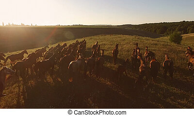Horses running in slow motion. Brown horses on the meadow....