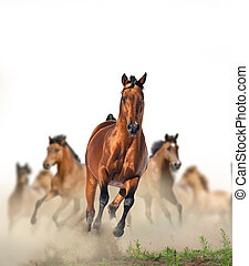 Horses running in the dust - Concept: herd of wild beautiful...
