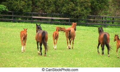 Horses Running - Mares and foals startled in rain.