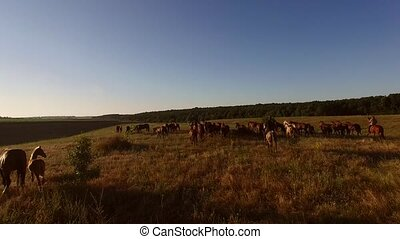 Horses running on a meadow.
