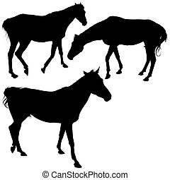 Horses Silhouettes 9 - detailed illustrations