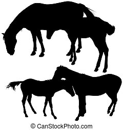 Horses Silhouettes 6 - detailed silhouette illustrations