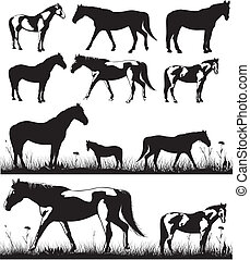 horses - silhouettes - silhouette of a horse in a meadow or...