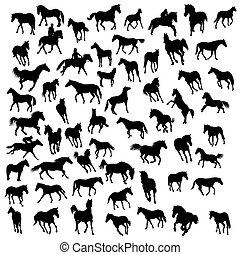 horses silhouettes - Big vector collection of different...