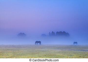 horses silhouettes in dense fog grazing