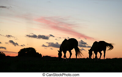 horses on a field in the summer in the countryside in...