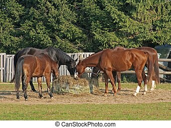 Horses - this image shows four horses at feed