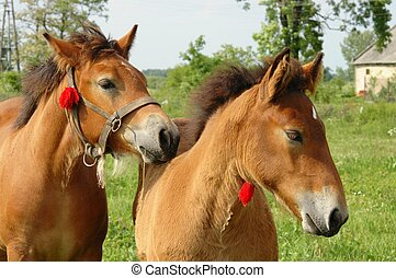 Two young horses