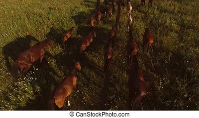 Horses walking on grass.