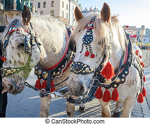 Horses with carriage on the Main Market Square in Krakow