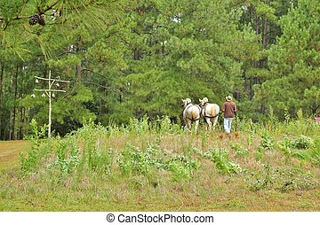 Horses working the farm 2