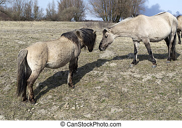 horsesgrazing on the field