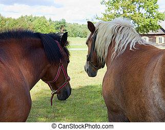 horsesl in a meadow