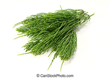 Horsetail - some horsetail stems on a light background