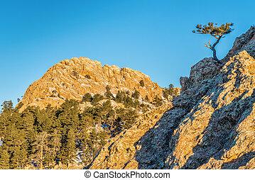 Horsetooth Rock and pine tree - Horsetooth Rock - a landmark...