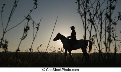 Horsewoman riding on their horse over a meadow sunset ....