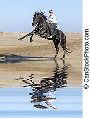 horsewoman, und, aufbäumen, hengst