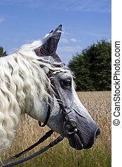 horsey, gesicht