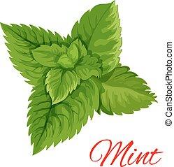 hortelã, folhas, grupo, isloated, emblema