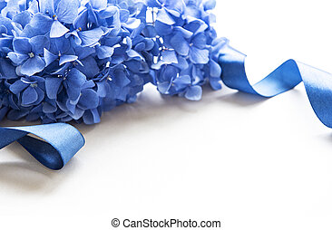 hortensia, bleu fleurit