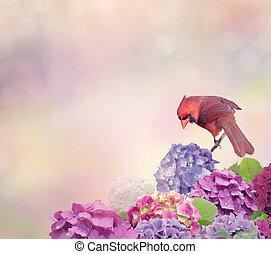 hortensia, bloemen, kardinaal, noordelijk