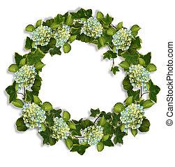 hortensia, couronne, lierre