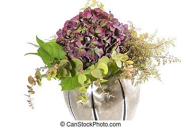 hortensia, fleur, fond blanc, vase