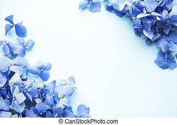 hortensia, fleurs, bleu