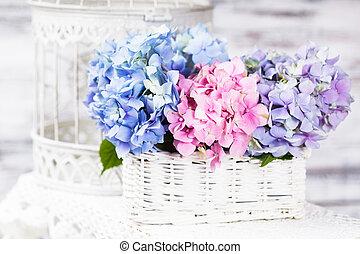 hortensia, fleurs