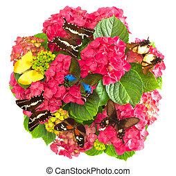 hortensia, flores, con, colorido, mariposas