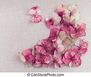 hortensie, blütenblätter, in, boden, recht, ecke, auf, weinlese, stoff