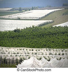 Horticulture - Apple orchards with protection cover nets at ...