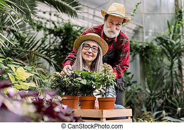 horticulture, beau, personnes agées, temps, étreint, associez portrait, fonctionnement, jointure, barbu, jardiniers, femme, flowerpots., dépenser, orangerie, homme, amour, concept., jardinage, derrière