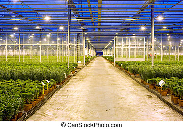 Horticulture transport lane - A wide, concrete, transport...