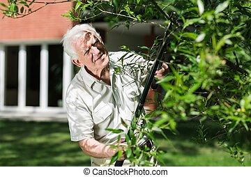 Horticulturist cutting tree branch - Elder horticulturist...