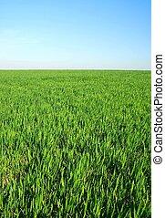 horzon, ウィット, 青い空, 草, 緑