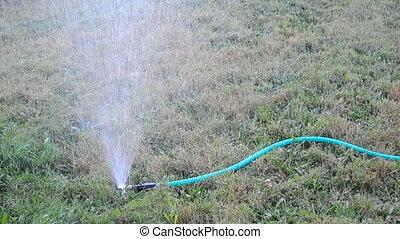 Hose Sprinkler - A sprinkler attached to a hose watering the...