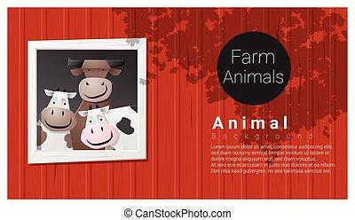 hospodaření animální, grafické pozadí, s, kráva