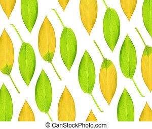 Hosta Leaf Beauty