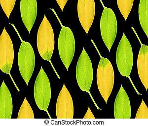 Hosta Leaf Design