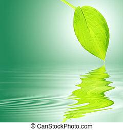 hosta, levél növényen, felett, víz