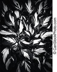 Hosta variegata, at black - white