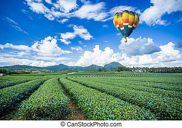Hot air balloon over tea plantations with mountain...