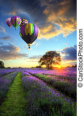 Hot air balloons flying over lavender landscape sunset -...