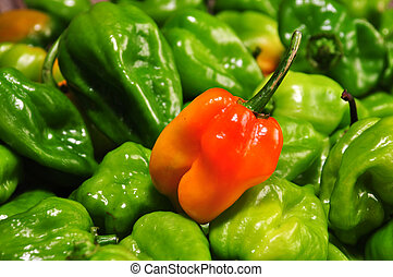 hot chilli peppers from mexico