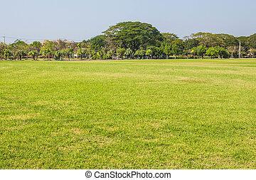 Hot golden grass
