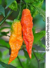 Hot Pepper Farm - Organic pepper farm near Asheville, North ...