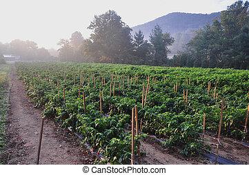 Hot Pepper Farm - Organic pepper farm near Asheville, North...