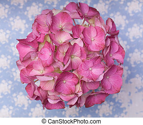 Hot pink hortensia flowers on a blue background with white splashes