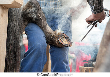 Close up of hot shoeing the horse